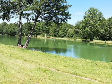 Lac bordé d'arbres